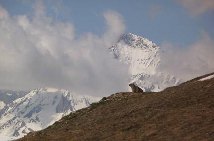 Massif de la Vanoise - Randonnée